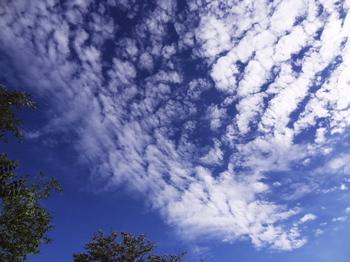 17.9.1  うろこ雲-2.jpg