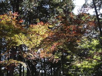 木漏れ日-5.jpg