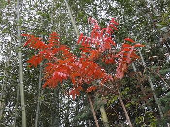 紅葉-1.jpg
